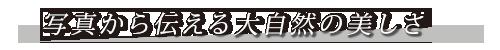 mrkim-banner